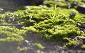 Обои трава, ростки, мох, палочки
