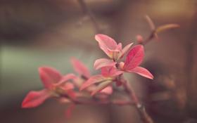 Обои листья, mini fall, красные