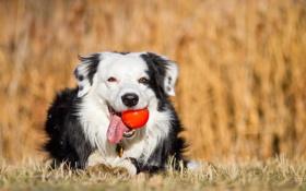 Картинка друг, мяч, собака