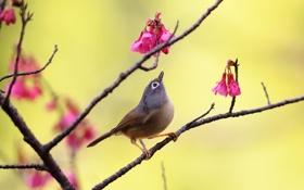 Обои цветы, фон, дерево, птица, ветка, розовые