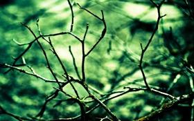 Обои макро, ветки, природа, фон, дерево, обои, растения