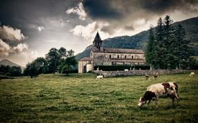 Картинка landscape, пейзаж, nature, cows, трава, небо, light