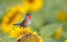 Обои природа, птица, краски, подсолнух, перья, клюв