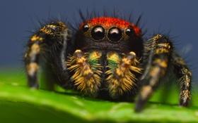 Обои лист, паук, насекомое