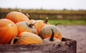 Картинка осень, макро, pumpkins