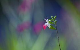 Обои цветок, растение, стебель