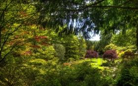 Обои зелень, деревья, ветки, сад, Канада, кусты, лужайка
