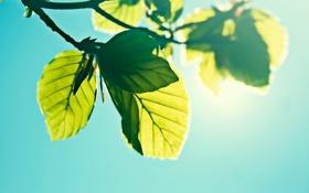 Картинка небо, солнце, листва
