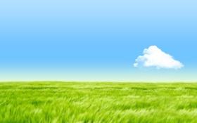 Картинка поле, небо, трава, облако