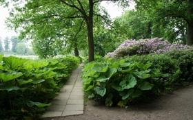 Картинка дорожка, трава, Дания, листья, кусты, деревья, Grаsten