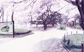 Картинка сакура, парк, карта, лепестки, Деревья
