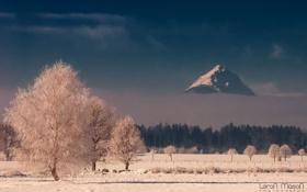 Обои зима, иней, лес, гора