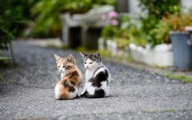 Картинка дорога, котята, друзья