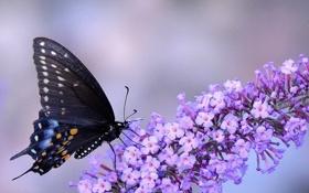Картинка цветок, макро, фото, бабочка