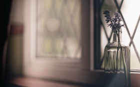 Картинка цветы, окно, банка