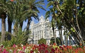 Картинка цветы, пальмы, здание, Испания, Spain, Valencia, Валенсия