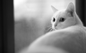 Обои кошка, окно