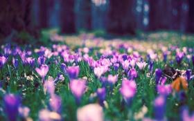 Обои nature, трава, лето, поляна, деревья, день, природа