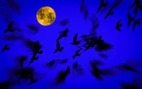 Обои Луна, ночь, птицы