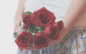 Картинка листья, девушка, цветы, фон, розы, руки, красные