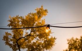 Обои лампочка, дерево, провод