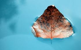 Обои вода, макро, фото, обои для рабочего стола, листь