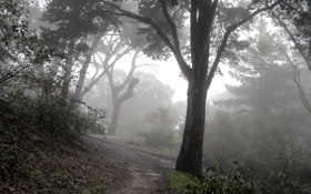 Обои туман, лесная, тропинка, дерево