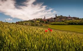 Обои Italy, маки, Piedmont, Италия, поля, деревня