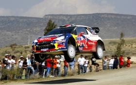 Обои Red Bull, Sebastien Loeb, Спорт, Rally, WRC, Люди, Daniel Elena