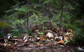 Картинка лес, грибы, боке