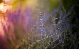 Обои поле, лето, природа, утро, травы