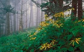 Обои природа, пейзаж, цветы, деревья, туман