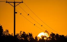 Обои деревья, закат, птицы, жёлтый, силуэт, линия электропередачи