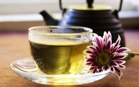 Картинка цветок, зеленый, чай, чайник, чашка, блюдце