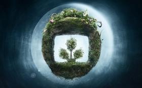 Обои фигура, растение, земля