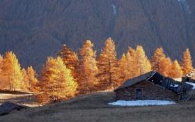 Картинка деревья, горы, дом