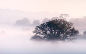 Обои небо, деревья, пейзаж, природа, туман, утро, sky