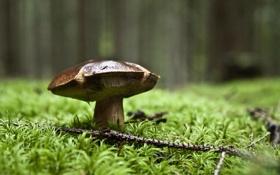Картинка лес, трава, гриб, ветка