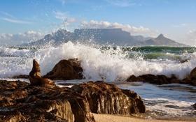Обои море, волны, природа, тюлень