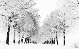 Обои зима, белое, снег, деревья, иней