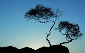 Обои небо, дерево, силуэт, Китай