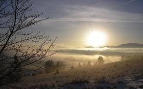 Обои природа, туман, рассвет, утро, forest, river, trees