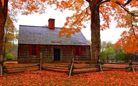 Обои осень, природа, листва