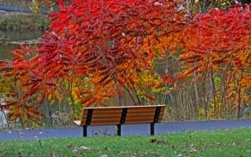 Картинка листья, дорожка, скамья, пруд, деревья, парк, осень