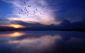 Обои вода, деревья, птицы, озеро, река, фото, фон