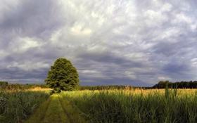 Обои тропа, лес, горизонт, даль, поле, дерево