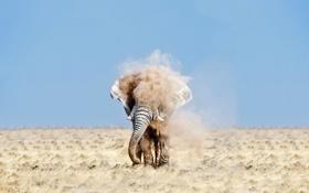 Картинка песок, пустыня, слон, пыль