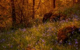 Картинка лес, трава, деревья, цветы, камни