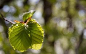 Обои листья, свет, макро