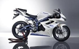 Обои мотоцикл, moto, Triumph, Daytona, триумф, 675, дайтона